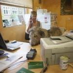 Kleintierpraxis Tangstedt | Tierarztpraxis in der Region Pinneberg